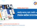offline-ninja-system